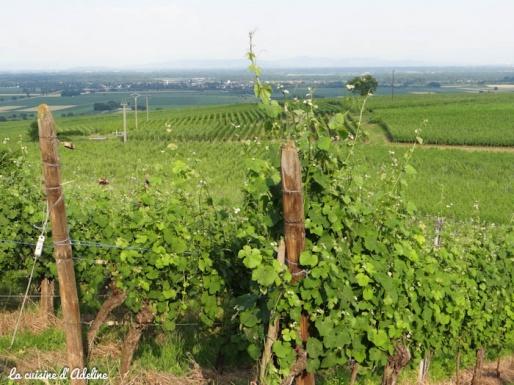 vignes becker grand cru paysage ecotourisme