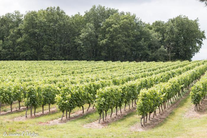 Vignes vin de Fronton