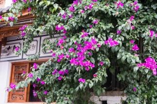 Fleurs centre ville Dali