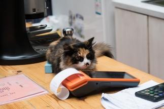 Mimi le chaton
