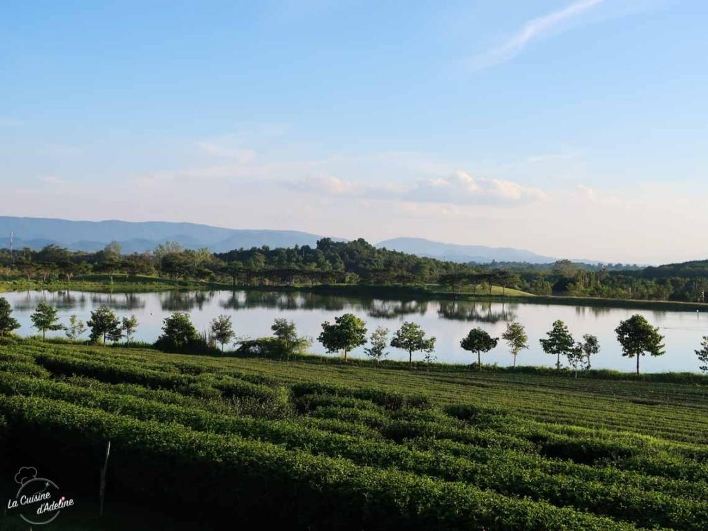 Singha Park Chiang Rai Thailande