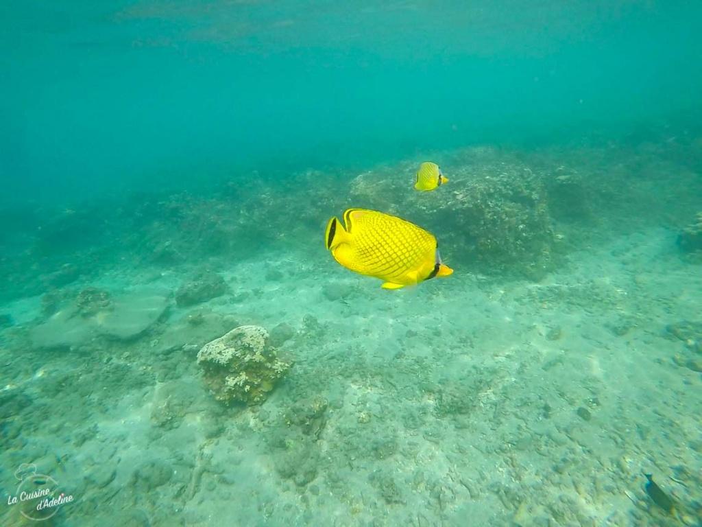 Snorkelling Kood Thailande