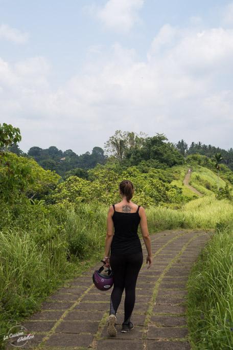 Balade rizière Campuhan Ridge Ubud - Bali