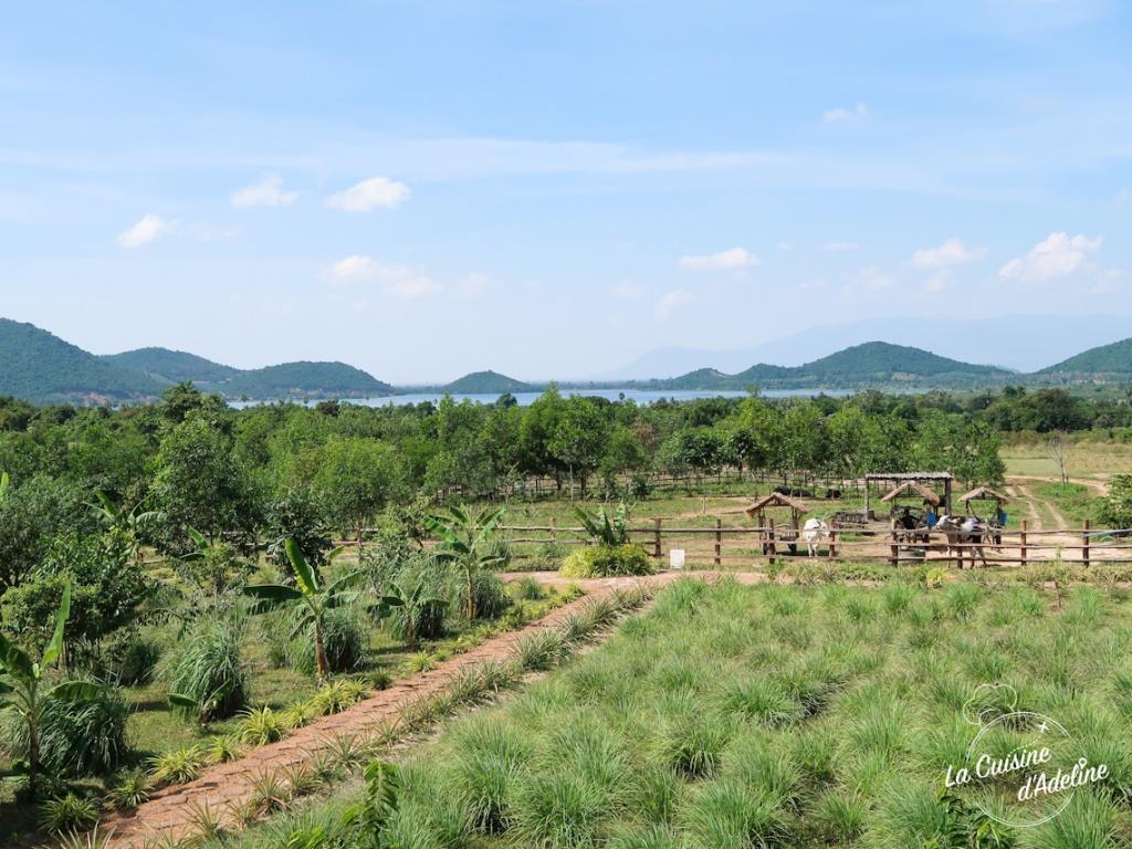 Visiter une plantation de poivre a Kampot Cambodge