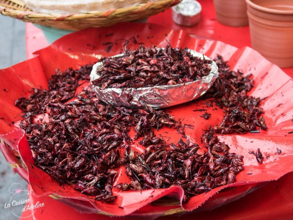 Insectes Mercado 20 de noviembre Oaxaca Mexique