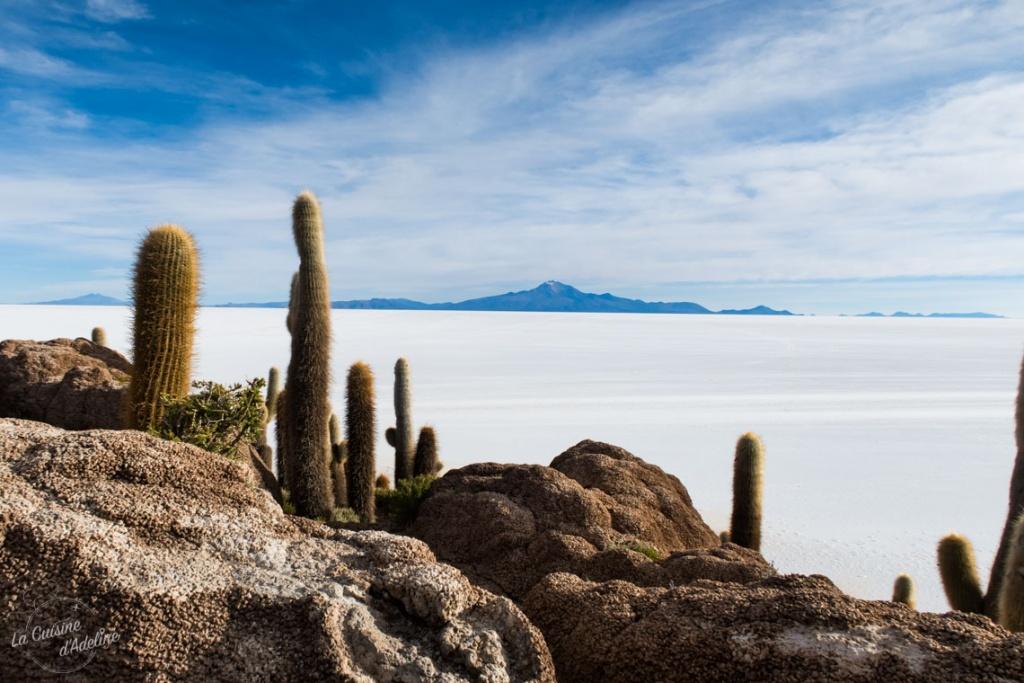 Isla Incahuasi Salar d'Uyuni