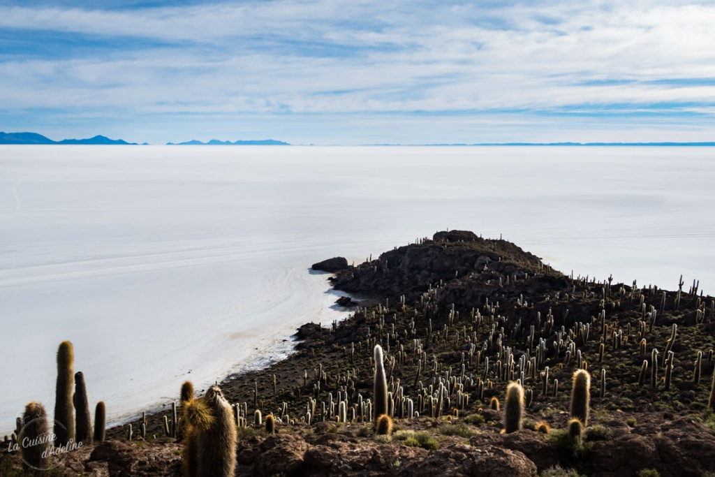 Isla Incahuasi Salar d'Uyuni ile aux cactus