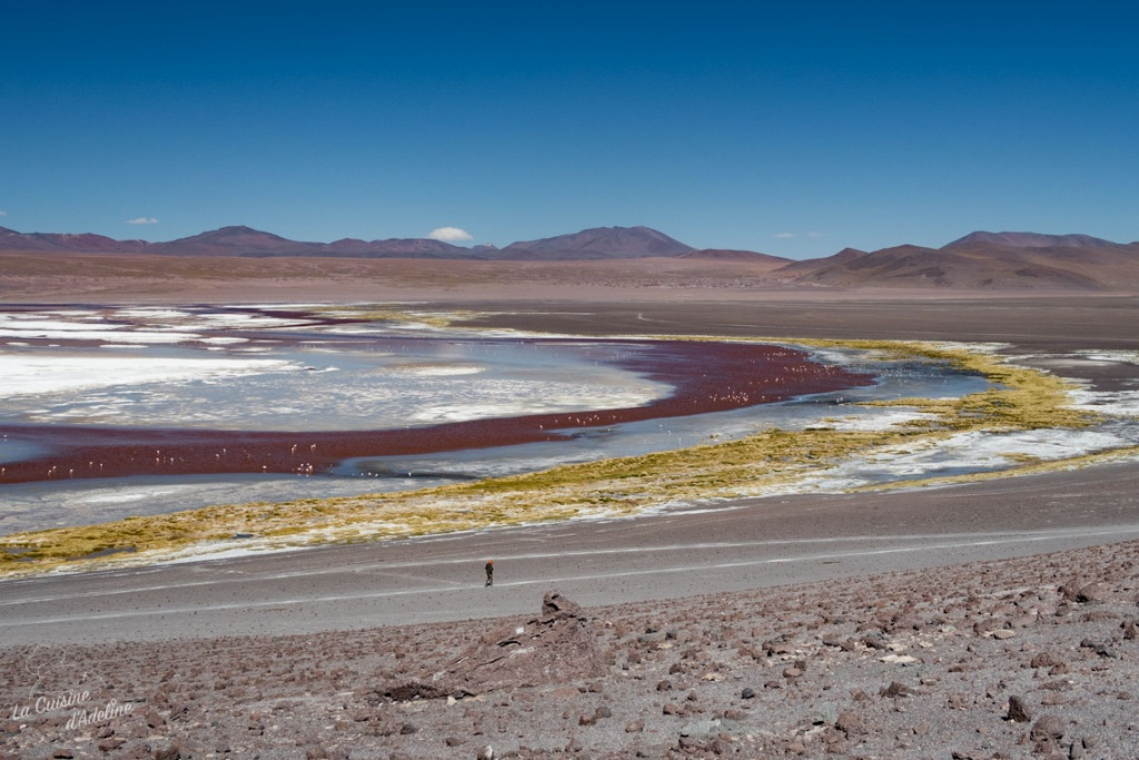 Laguna colorada Bolivie road trip Uyuni