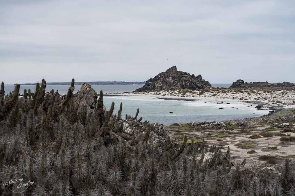 Isla Damas Punta Choros Chili