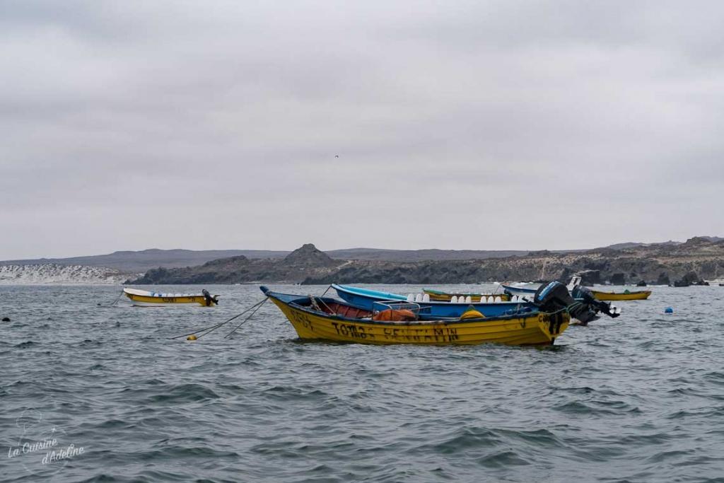 Isla Damas Punta Choros Chili port