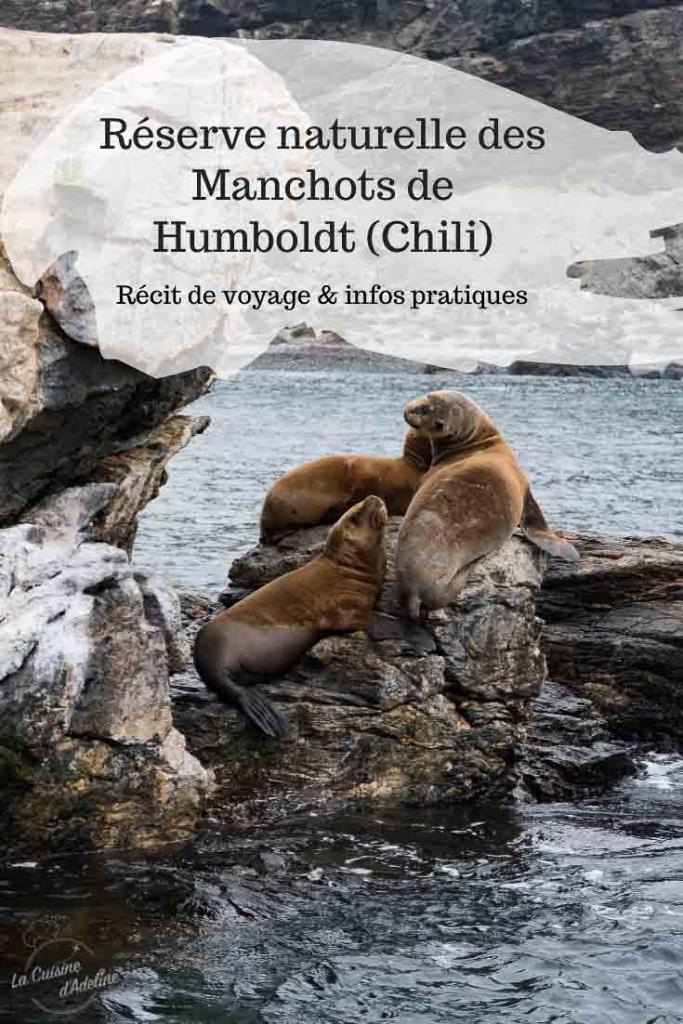 Isla Damas Punta Choros Manchots de Humboldt reserve naturelle Chili voyage