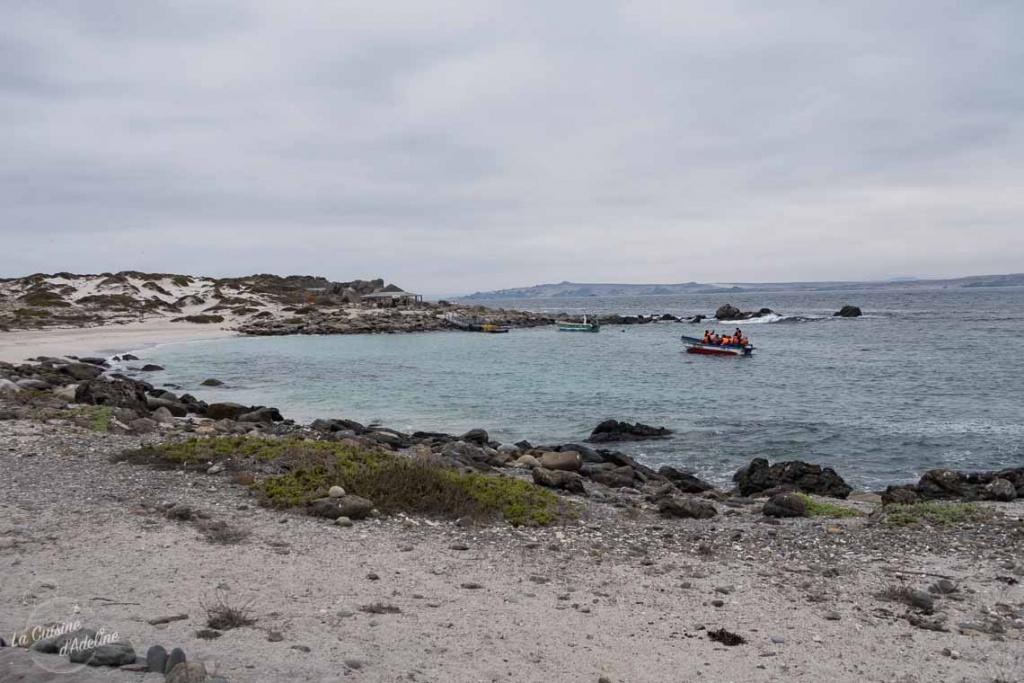 Isla Damas excursion Chili