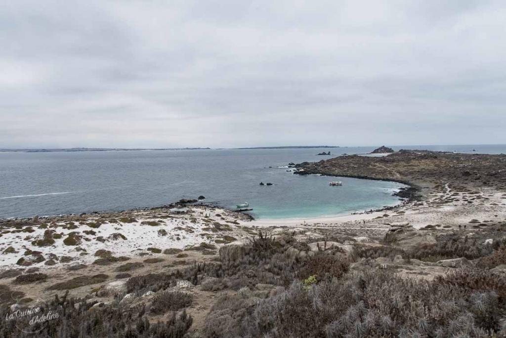 Isla damas La Serena excursion