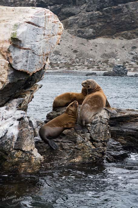 Voir des lions de mer au chili